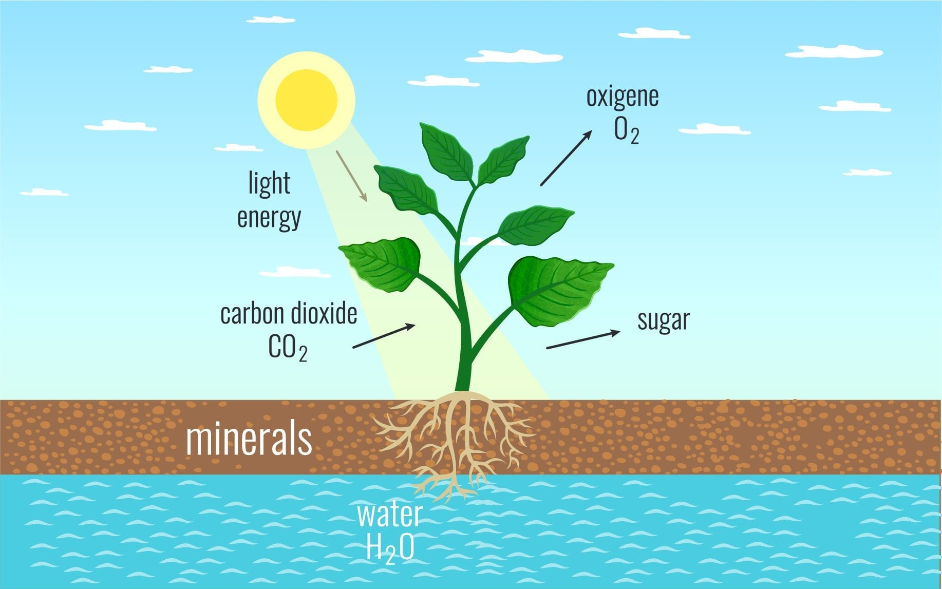 Life Science Grade 11 Photosynthesis Practicals Memo